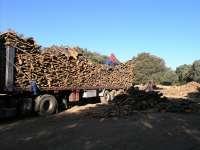 La campaña de corcho en Extremadura comienza con la expectativa de