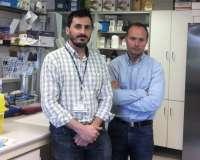 Investigadores asturianos hallan un nuevo biomarcador para la detección precoz del cáncer de páncreas