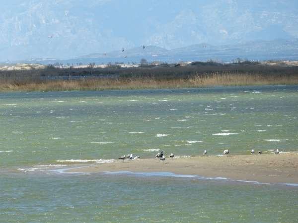 La Plataforma en Defensa del Ebro afirma que el Plan Hidrológico agravaría los problemas del Delta