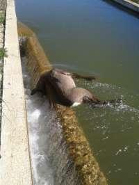 EA advierte de que la puesta en funcionamiento de canales de riego constituye una trampa mortal para muchas especies