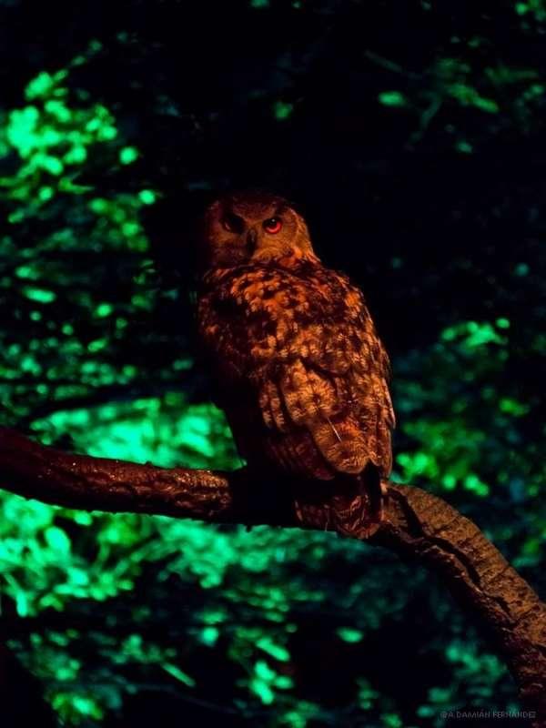 El Real Jardín Botánico de Córdoba acogerá un evento didáctico de aves nocturnas del bosque