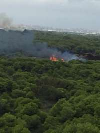 Controlado el incendio forestal de El Saler