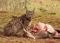 Medio Ambiente protege un total de 148 especies de flora y fauna amenazadas a través de los planes de recuperación