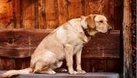 El 38,85 por ciento de las casas rurales en Extremadura admite mascotas