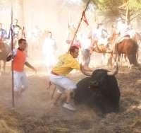 El Refugio denuncia al autor de la lanzada mortal del Toro de la Vega y al alcalde de Tordesillas por maltrato animal