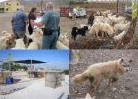 Localizan a casi 300 animales en dos perreras clandestinas en Molina de Segura y Mazarrón