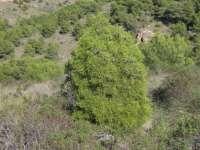 Medio Ambiente expone los trabajos del proyecto LIFE europeo para preservar los bosques de ciprés de Cartagena