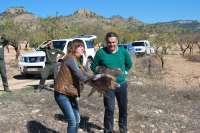 Un ejemplar de águila perdicera, liberada tras su recuperación en el Centro de Fauna Silvestre de Albacete