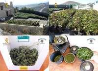 Guardia Civil detiene en Lorca a tres personas con más de 2.000 plantas de cannabis