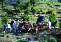 El Gobierno de Canarias abre la convocatoria de ayudas del PDR al sector primario