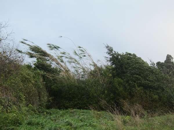 Seguridad activa para el domingo y lunes la alerta naranja por viento, ante la previsión de rachas de más de 130 km/h