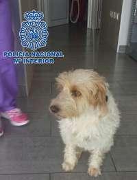 Detenido un hombre por golpear, dar patadas y morder a un perro pequeño en una calle de Maspalomas (Gran Canaria)