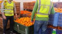 Sucesos.- Detenidas seis personas acusadas de robar 175.000 kilos de naranjas en Alginet y Algemesí