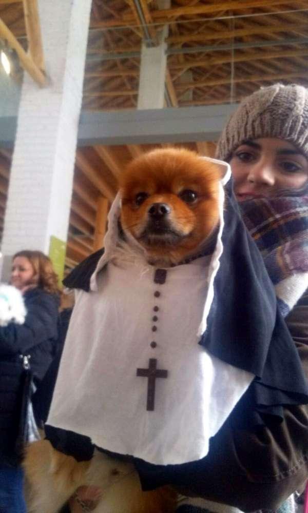 El perro Leo, disfrazado de 'monja', gana el I Concurso de Disfraces para Mascotas de Vegas del Genil
