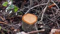 Ecologistas lamenta que la Junta esté talando