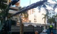 El Ayuntamiento de Almuñécar cifra en 200.000 euros los daños ocasionados por el viento en el municipio