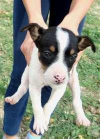 La provincia de Segovia tendrá en junio un servicio de recogida de perros abandonados que fomentará la adopción