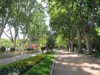 Huesca celebra la Semana del Árbol del 14 al 20 de marzo