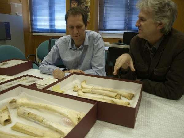 El ADN nuclear fija la conexión entre los habitantes de la Sima de los Huesos de Atapuerca (Burgos) y los neandertales