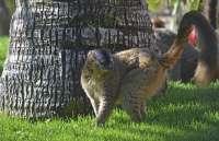 El nacimiento de un lémur frentirrojo da la bienvenida a la primavera en Bioparc