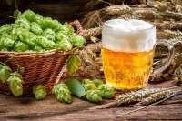 El consumo moderado de cerveza tiene un efecto