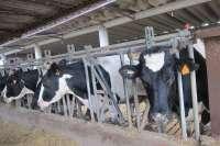 Los ganaderos inician una nueva etapa de movilizaciones contra la importación