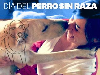 Especial Día del Perro sin Raza