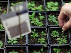 Varios semilleros de plantas.