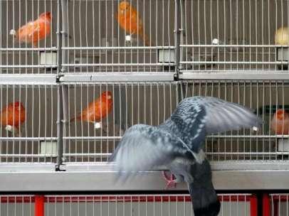 Tienda de pájaros en la Rambla de Barcelona.
