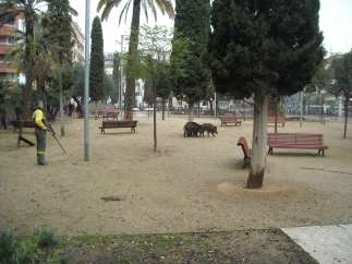Tres jabalíes, en los jardines de la Marquesa, en Barcelona.