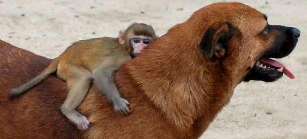 Perro con mono