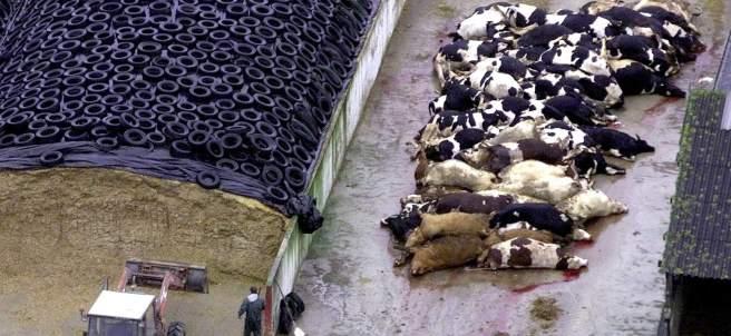 Las vacas locas