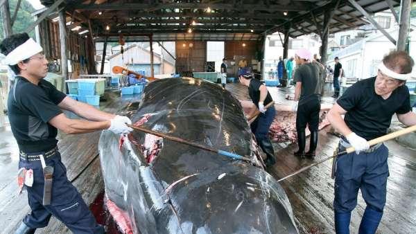 Pescadores japoneses