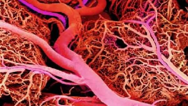 Logran producir vasos sanguíneos listos para injertar
