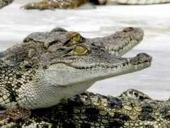 Muere un guía turístico atacado por cocodrilos en Sudáfrica