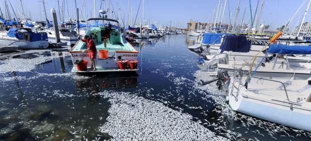 Millones de sardinas muertas en Los Ángeles