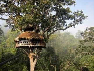 Selva en Laos
