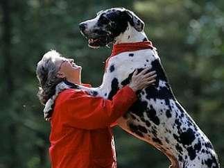 El perro más alto