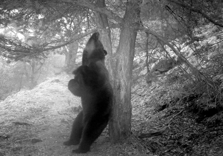 El despertar del oso