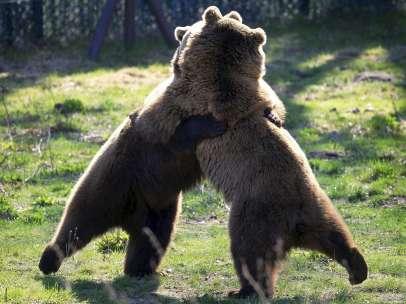 El bosque de los osos