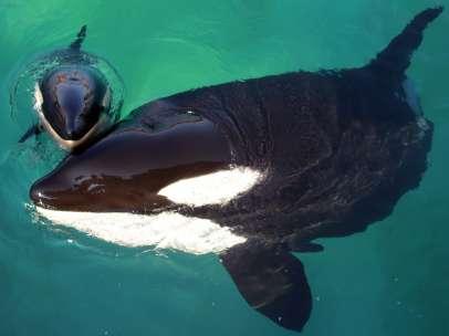 Una orca