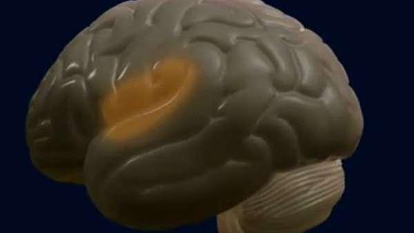 Científicos españoles hallan una explicación biológica a por qué la memoria guarda las aversiones