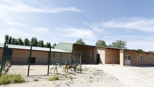 Instalaciones de la perrera de Getafe