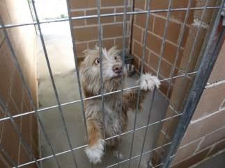 El abandono de animales de compañía permanece estable en España, 137.000 perros y gatos son recogidos al año