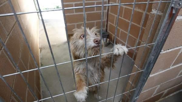 Uno de los perros acogidos en Getafe