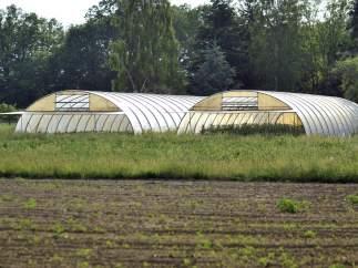 Granja alemana sospechosa de ser el orígen del E. coli