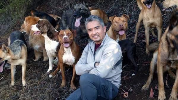 Demandan a César Millán por dar de alta a un pitbull violento sin rehabilitar que mordió a la dueña