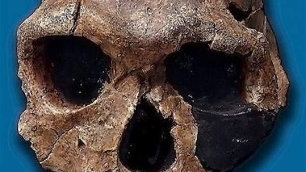 La diferencia entre Homo Sapiens y Neardenthales podría estar en su dieta, según un estudio
