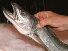 España suaviza a un 12% el recorte de la cuota de merluza en el caladero sur