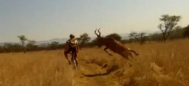 Un joven ciclista se convierte en una celebridad en Internet tras ser arrollado por un antílope